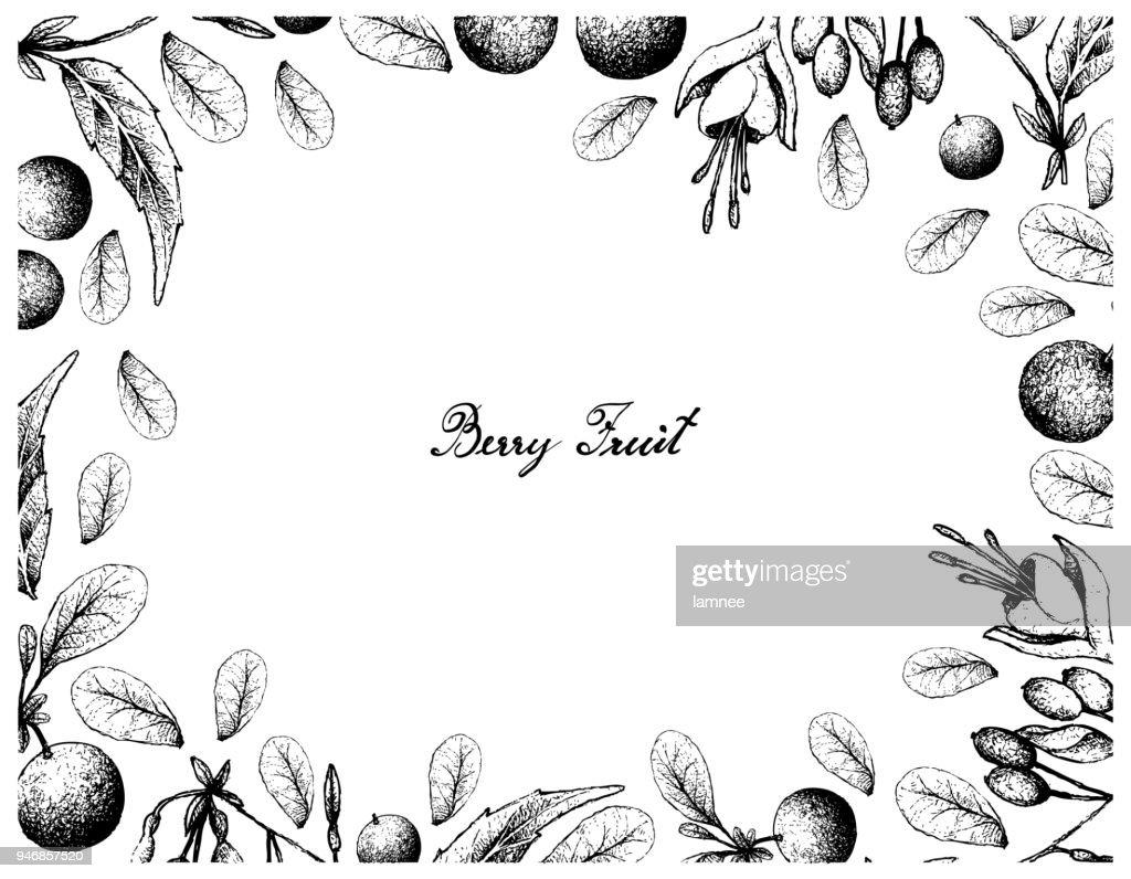 Hand Drawn of Bog Bilberries and Brinco de Princesa Frutis