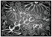 Hand Drawn of Fresh Fruits on Chalkboard Background