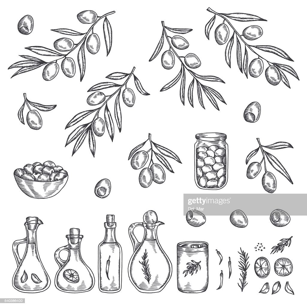Hand drawn olive graphic set. Vector illustration.