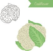 Hand drawn outlined and colored vector cauliflower