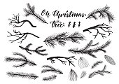 Hand drawn pine, spruce branches, twigs.