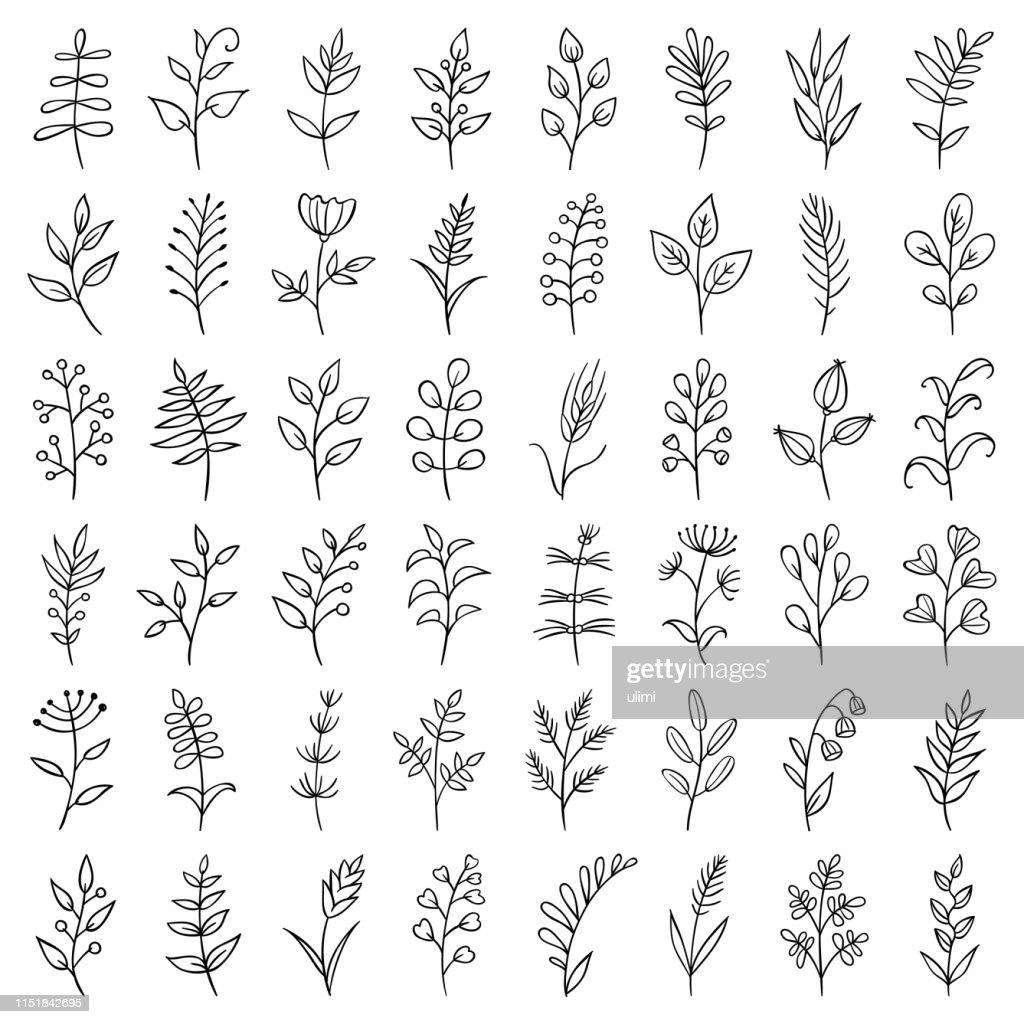 Hand drawn plants : stock illustration