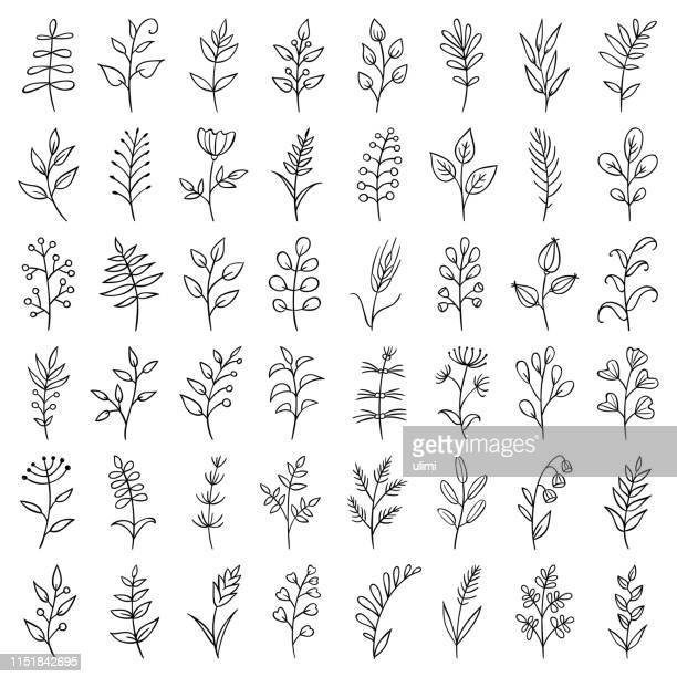 hand drawn plants - line art stock illustrations
