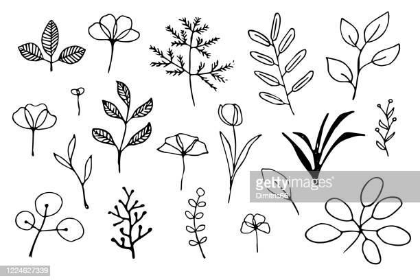 stockillustraties, clipart, cartoons en iconen met met de hand getekende planten - leaf