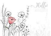 Hand drawn poppy blossom with black line