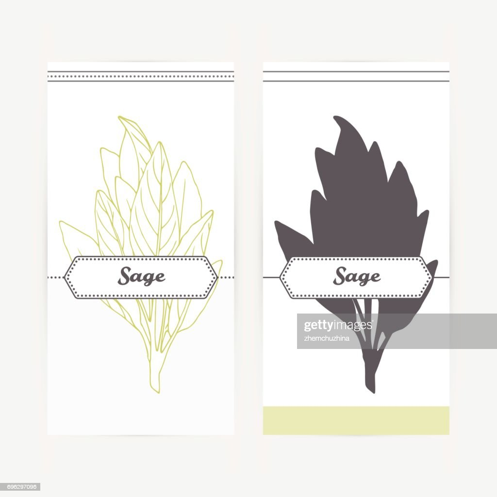 Hand drawn sage in outline and silhouette style. Spicy herbs