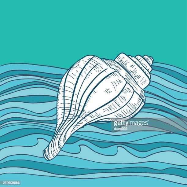 Hand gezeichnet Seashell