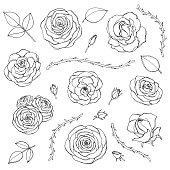 Hand drawn set of rose flowers with buds, leaves and thorny stems line art isolated on the white background. Floral collection of blossoms in sketchy style.