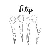 Hand drawn set of side view black and white tulip flower