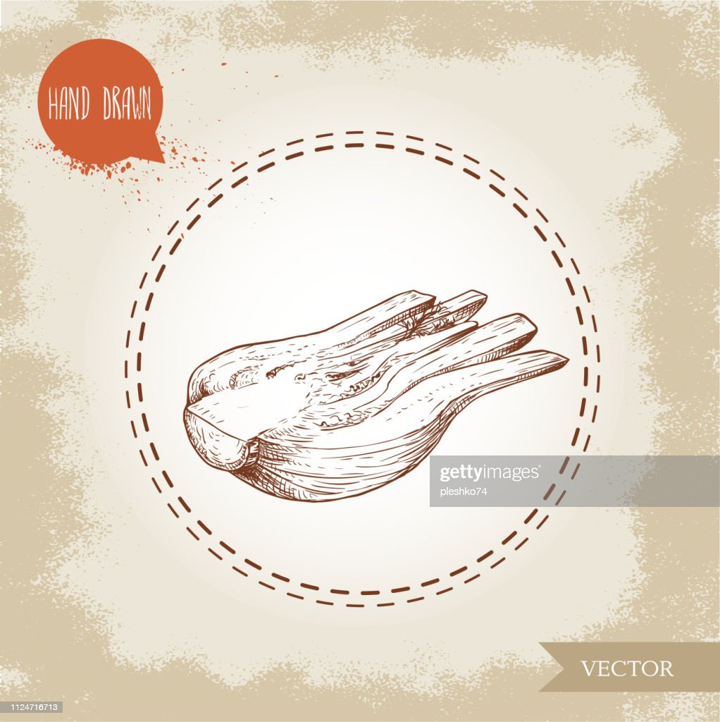 Hand drawn sketch fennel bulb. Half cut of spicy root plant with leaves. Herbs, spice and condiment vector illustration isolated on white background.
