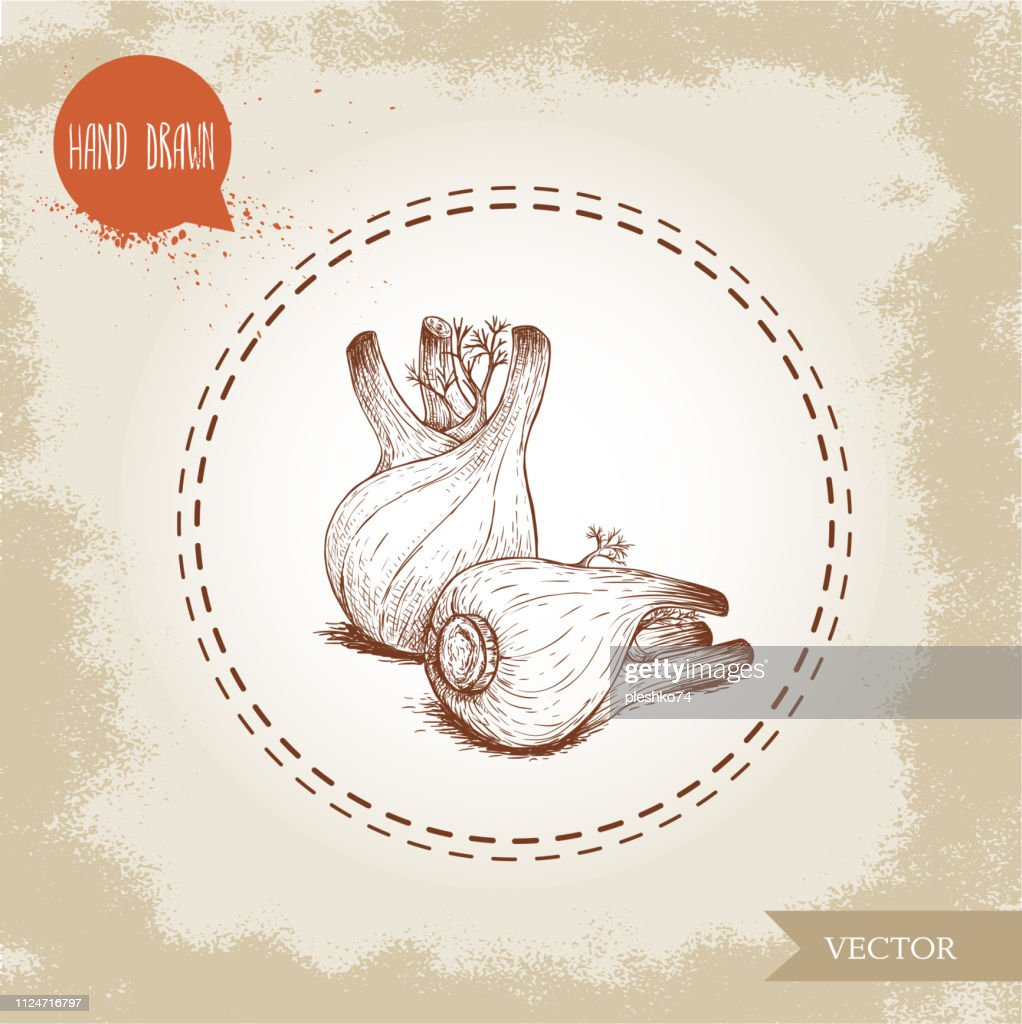 Hand drawn sketch fennel bulbs composition. Spicy root plant with leaves. Herbs, spice and condiment vector illustration isolated on white background.