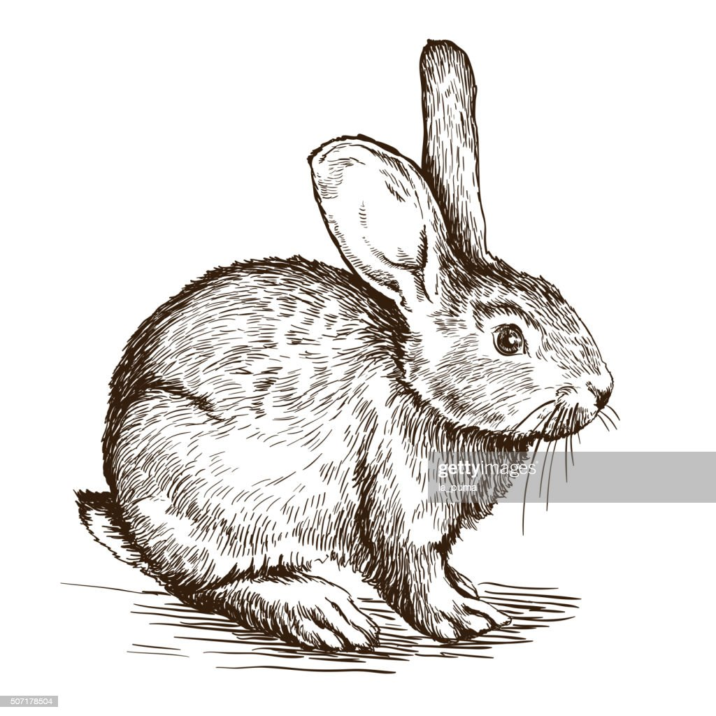 hand drawn sketch of  rabbit