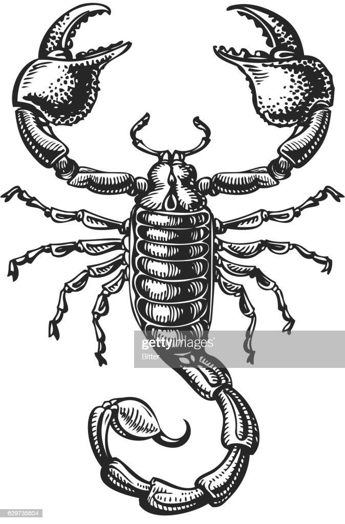 Hand drawn sketch of scorpion. Tattoo animal. Vector illustration