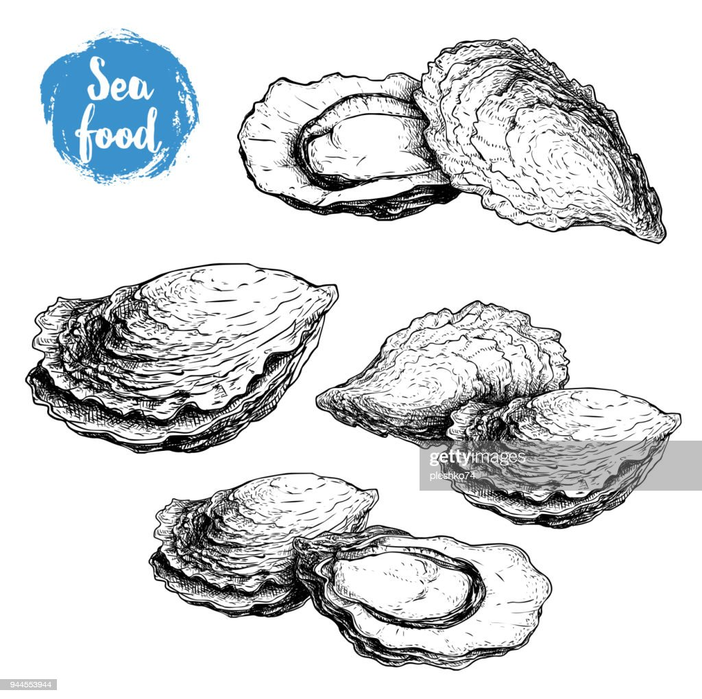 Hand drawn sketch oyster compositions set. Hand drawn illustration  of fresh seafood. Isolated on white background collection. Ideal for fish restaurant menu and sea food markets.