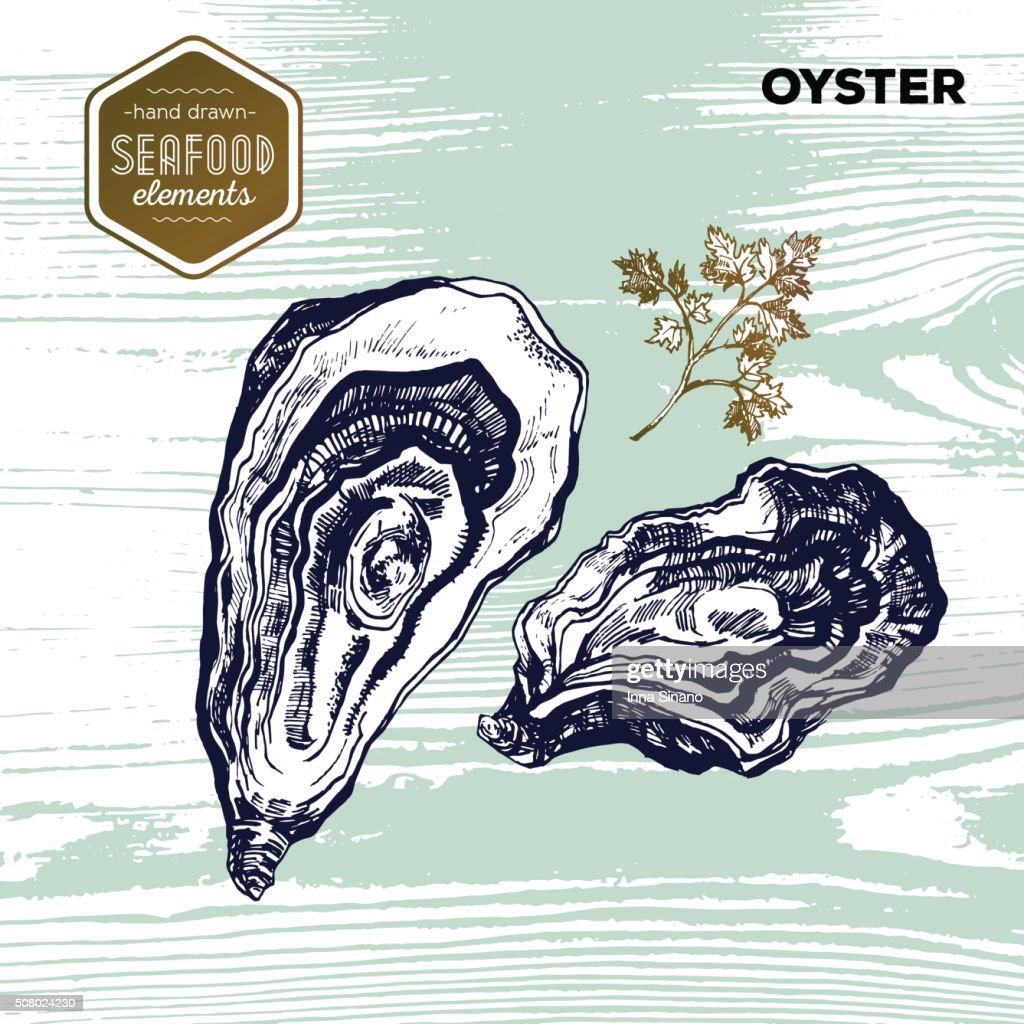 Hand drawn sketch seafood of oysters. Vector illustration. Vintage style