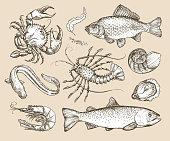 Hand drawn sketch set seafood. Vector illustration