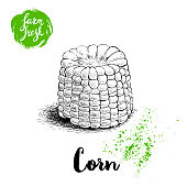 Hand drawn sketch style corn vegetable. Boiled farm fresh sweet corn. Organic cereal vector illustration. Sweetcorn food.