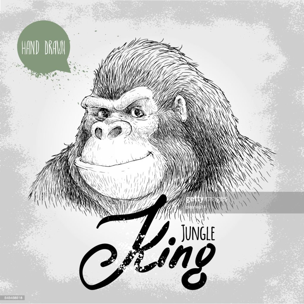 Hand drawn sketch style gorilla. Jungle King.