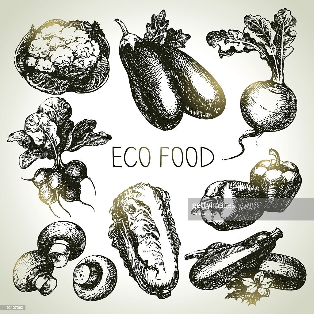 Hand drawn sketch vegetable set. Eco foods.Vector illustration