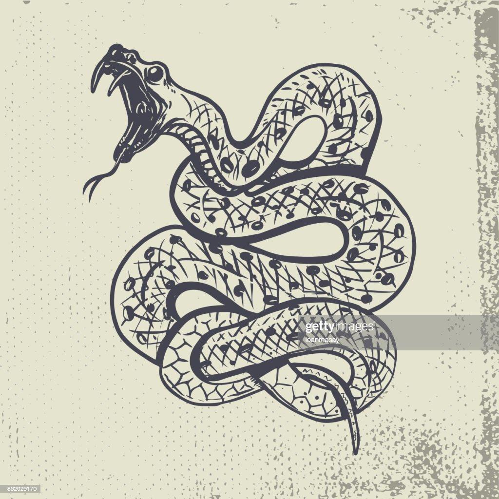 Hand drawn snake illustration on grunge background.