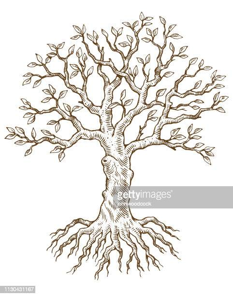 hand drawn tree vector illustration - woodcut stock illustrations