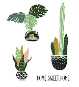 Hand drawn tropical house plants. Scandinavian style illustration, modern and elegant home decor. Vector print design with lettering - ' home sweet home '.