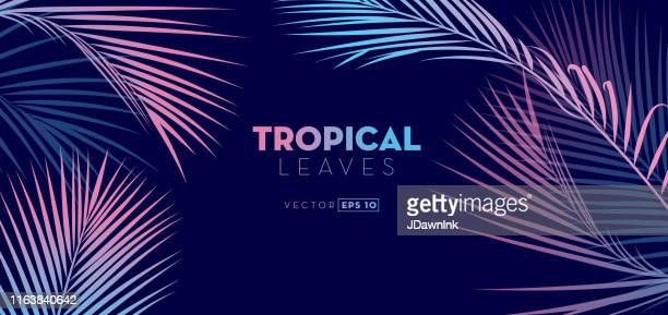 hand drawn tropical leaves background - palm tree stock illustrations