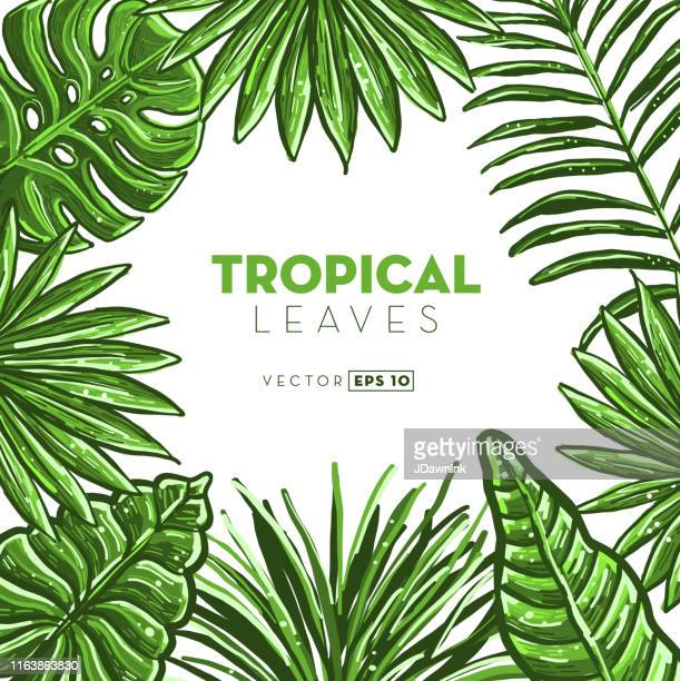 hand drawn tropical leaves background - tropical tree stock illustrations