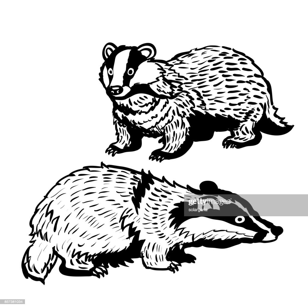 Hand drawn two Badger-Vector Illustration