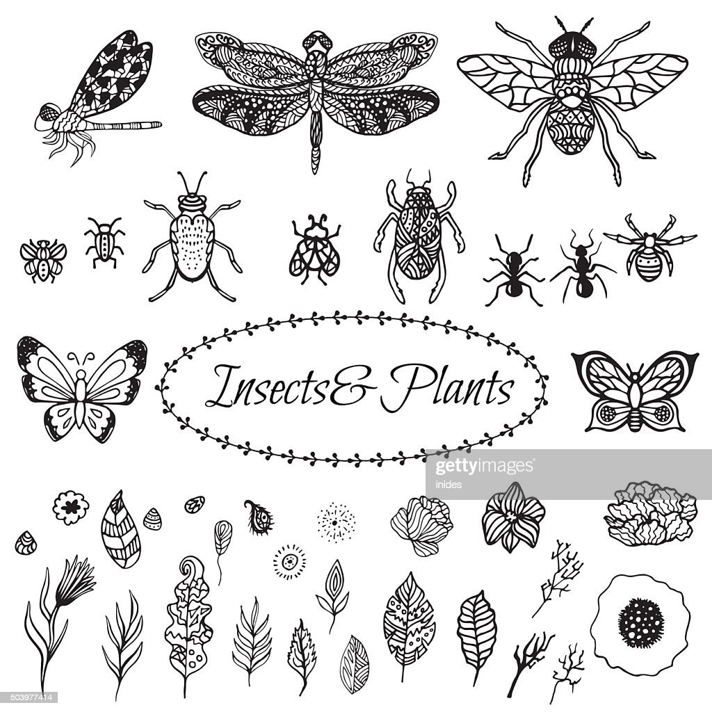 Hand drawn vector black plant leaves, flowers and insects