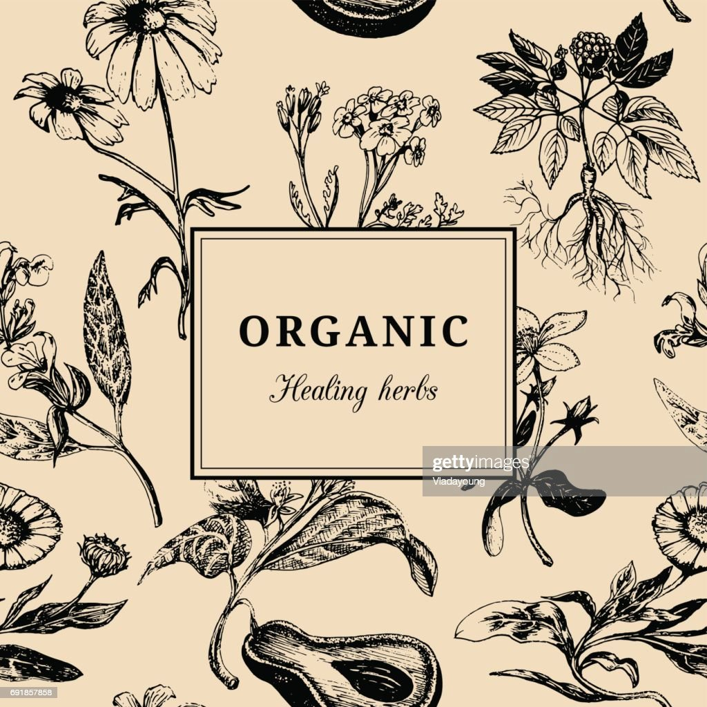 Hand drawn vector herbs. Organic healing plants background. Vintage floral card or poster.