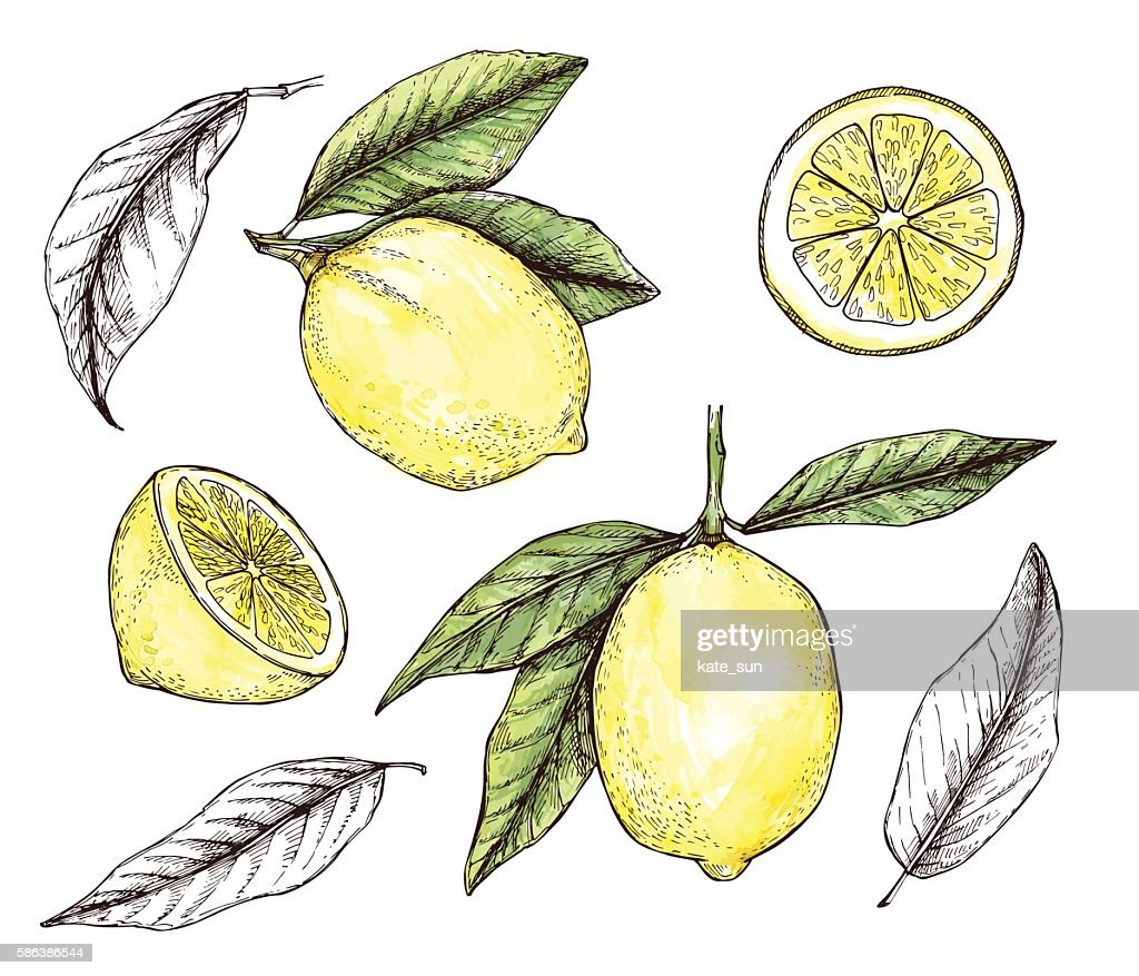 Hand drawn vector illustration - Collections of colorful Lemons.