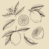 Hand drawn vector illustration - Collections of Lemons.