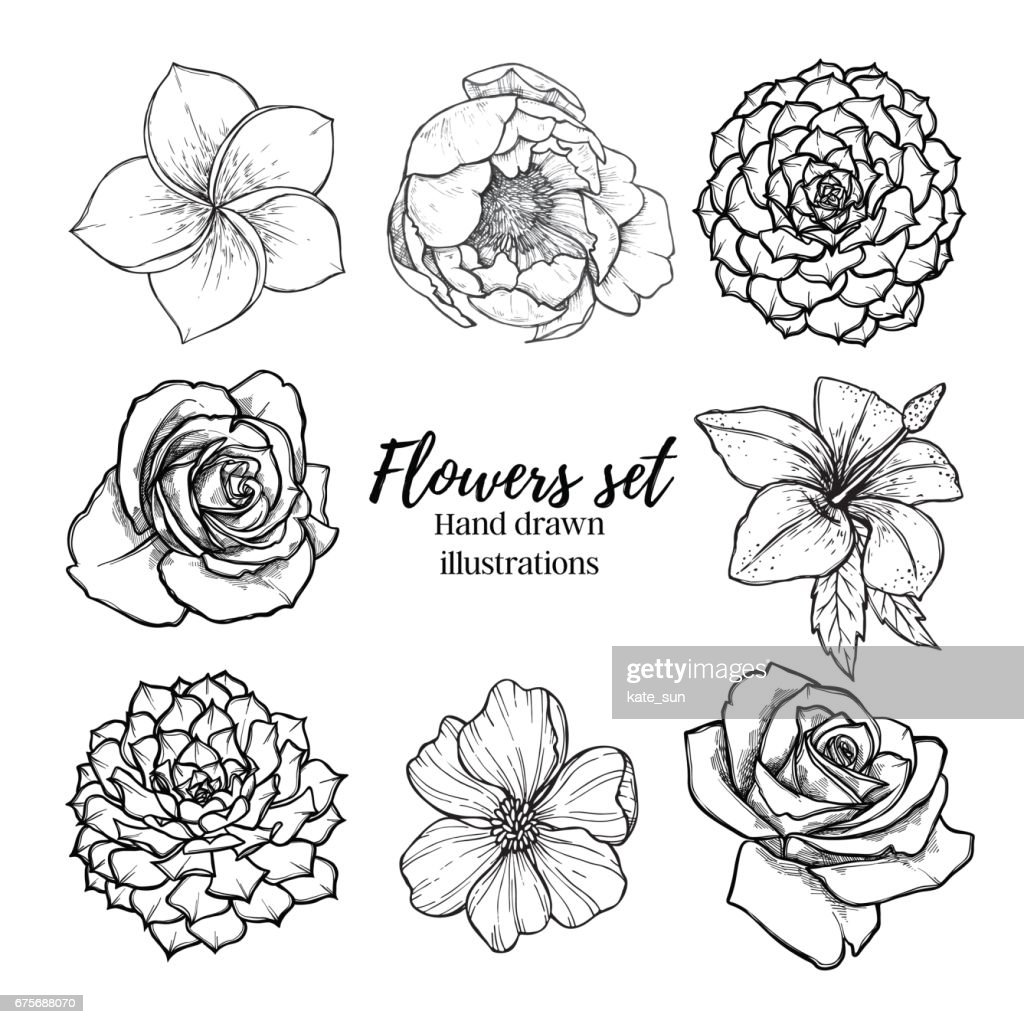 Hand drawn vector illustration - Flowers set (succulent, rose, peony, tropical flower). Perfect for wedding invitations, greeting cards, quotes, blogs, posters etc. Vintage collection