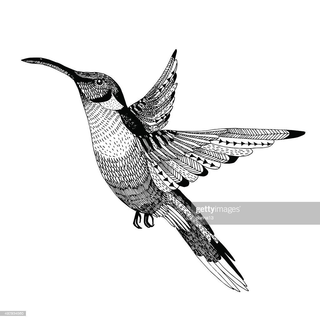 hand drawn vector illustration flying colibri