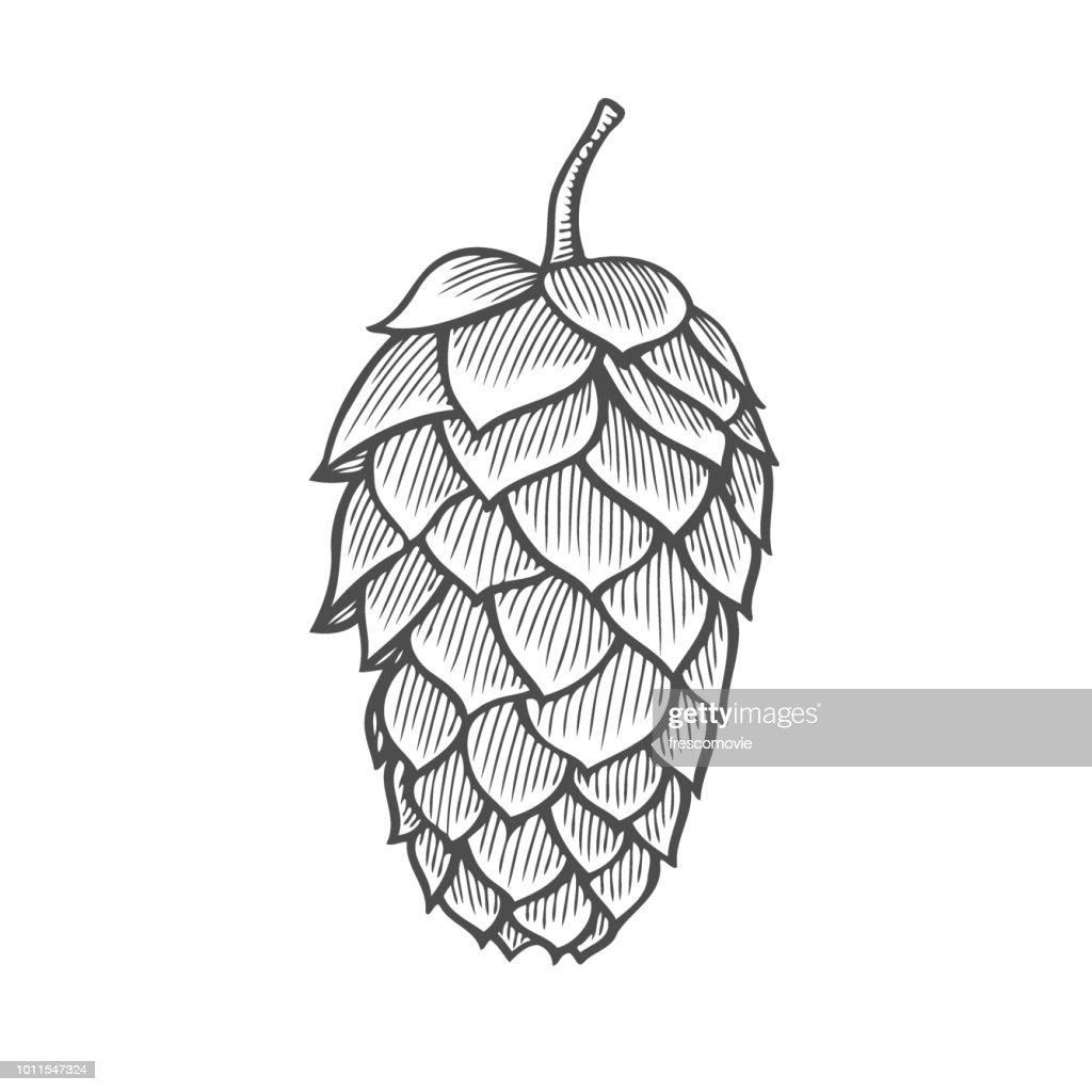 Hand drawn vector illustration of hops