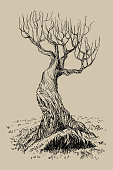 Hand drawn vector illustration of old mystical tree. Isolated illustration engraved style. Retro style.