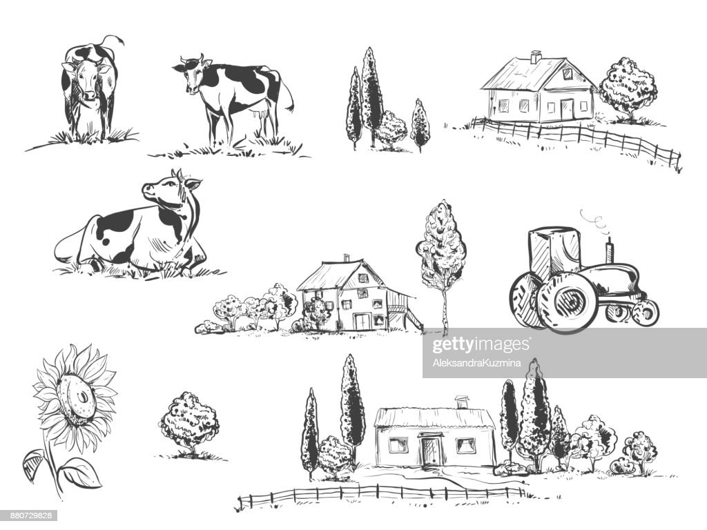 hand drawn vector illustration set with farm and cow, sunflowers. sketh.