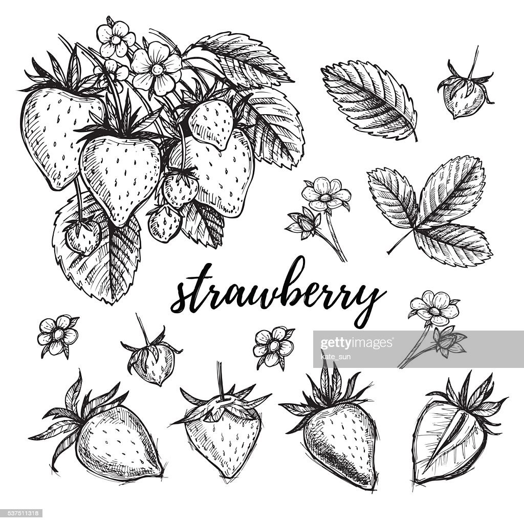 Hand drawn vector illustration - Strawberry set