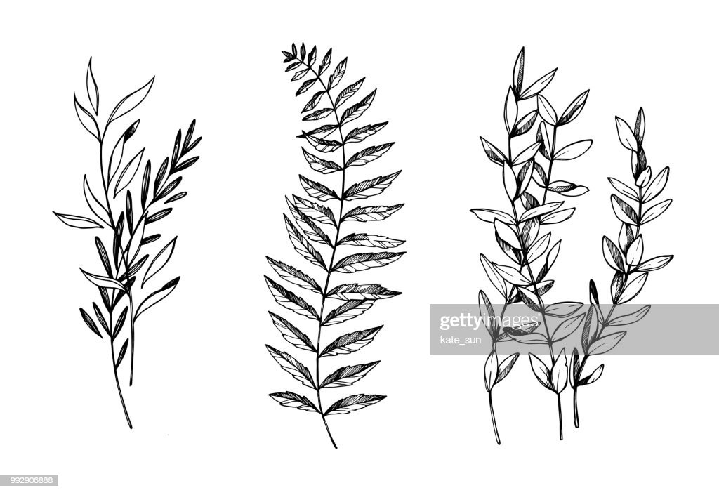 Hand drawn vector illustrations. Botanical branches of eucalyptus and fern. Floral design elements. Tattoo sketches. Perfect for weddng invitations, greeting cards, blogs, posters and more