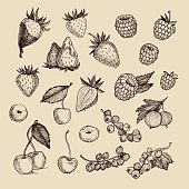 Hand drawn vector illustrations - Collection of berries