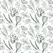 Hand drawn vector. Seamless pattern with herbs and spices.