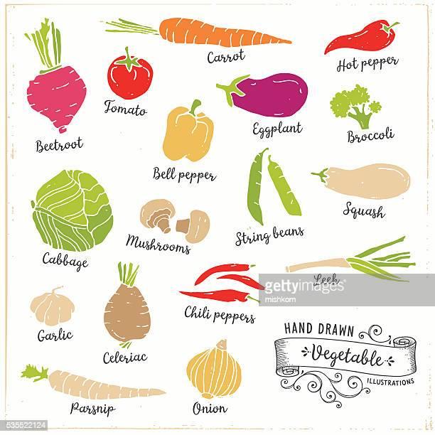hand drawn vegetables - parsnip stock illustrations, clip art, cartoons, & icons