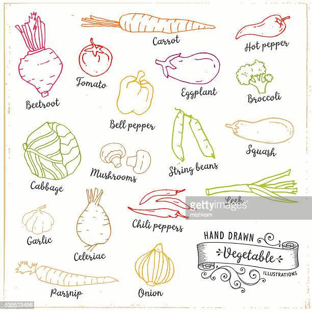 hand drawn vegetables - onion stock illustrations, clip art, cartoons, & icons