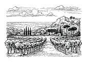 Hand drawn vineyard landscape.