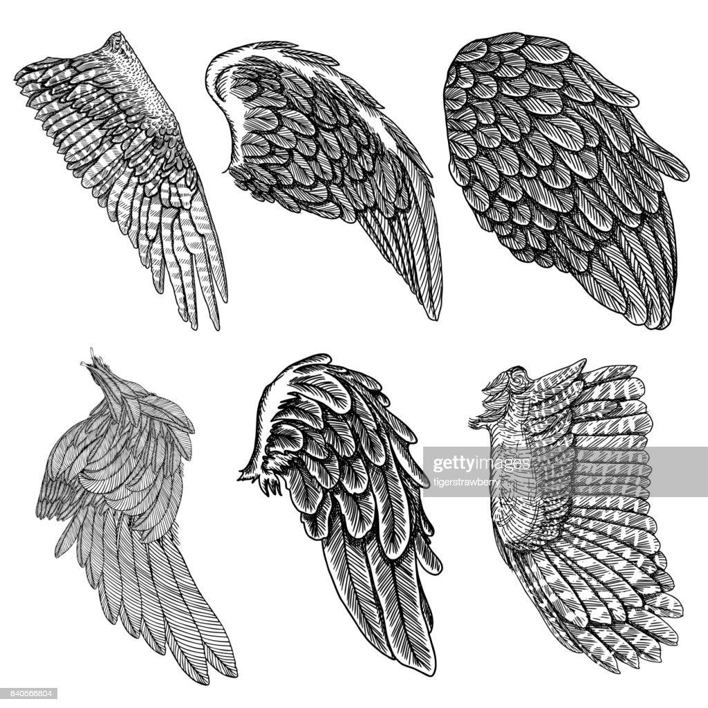 Ziemlich Vogel Flügel Vorlage Zeitgenössisch - Ideen fortsetzen ...