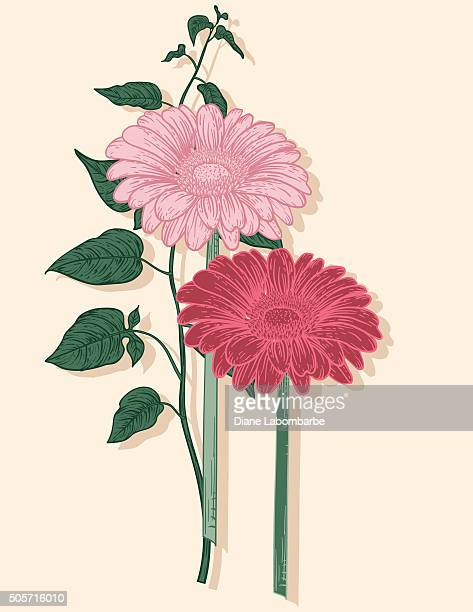 hand drawn vintage style flowers - pink gerbera daisies - gerbera daisy stock illustrations, clip art, cartoons, & icons