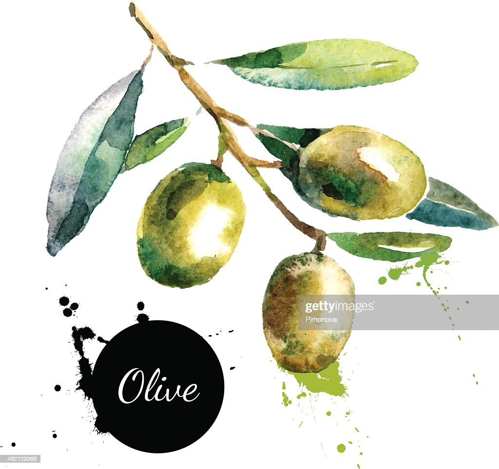 Hand drawn watercolor painting on white background. Vector illus