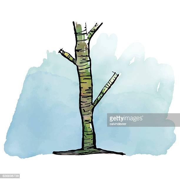 Hand drawn watercolor tree