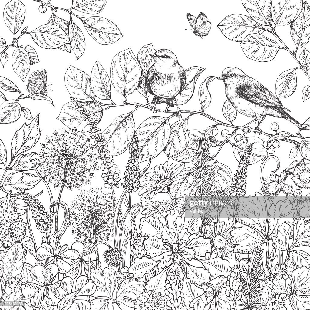 Hand drawn wildflowers, butterflies and birds.
